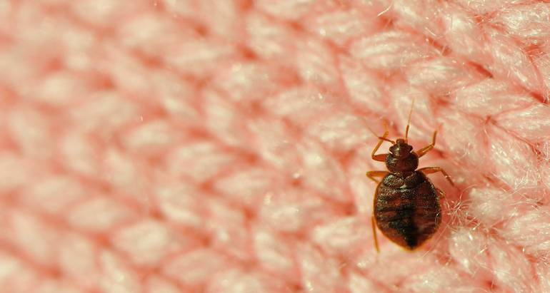 The United States' Top 50 Cities With Bed Bugs Features Four Michigan Cities